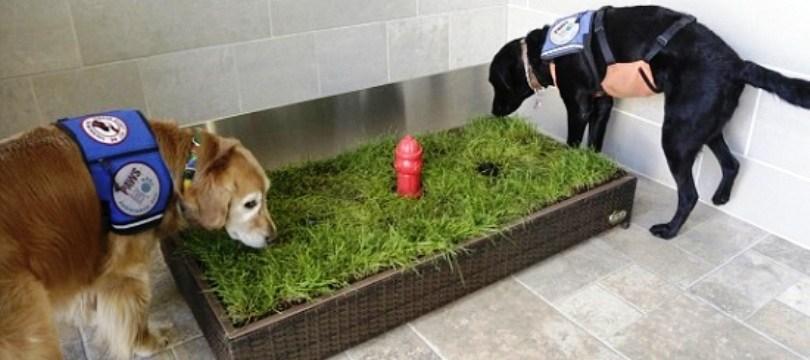 bac a litiere pour chien