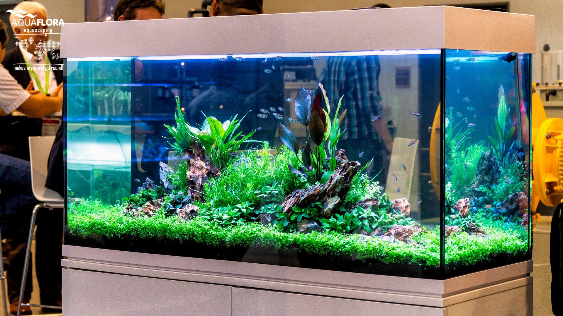 aquarium 120 cm