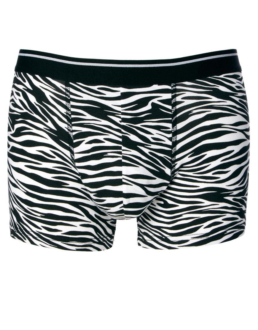 boxer zebre