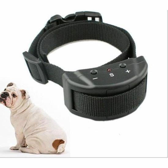 collier chien anti aboiement electrique