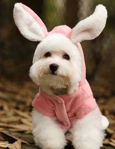 déguisement pour chien mignon