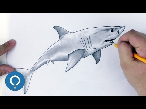 dessiner un requin blanc