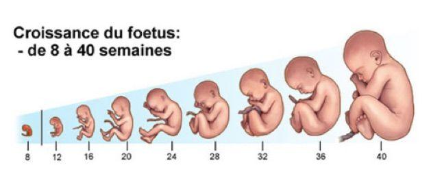 développement bébé semaine par semaine