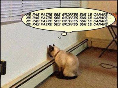 dressage de chat